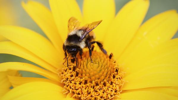 BEE-Amazed: